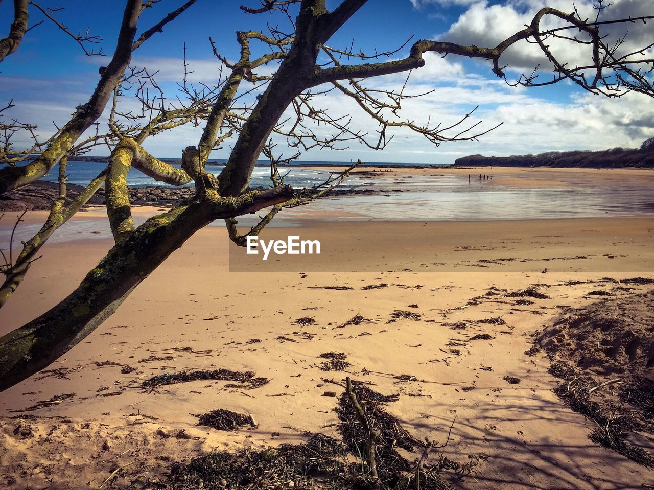beach, nature, sea, beauty in nature, sand, tree, tranquility, scenics, sky, tranquil scene, water, branch, shore, horizon over water, bare tree, outdoors, no people, day, landscape, dead tree