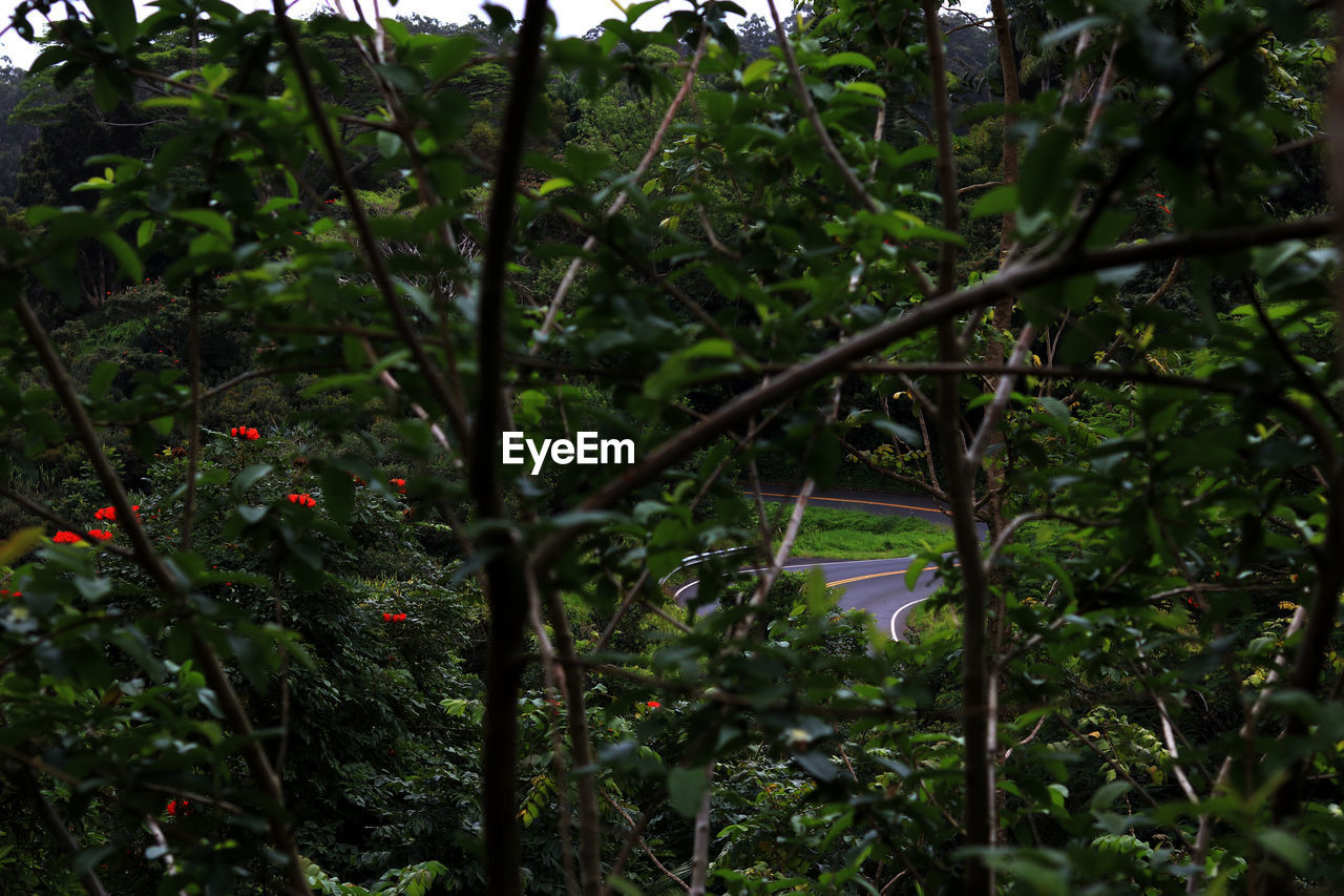 growth, nature, green, foliage, no people, outdoors, tree, day