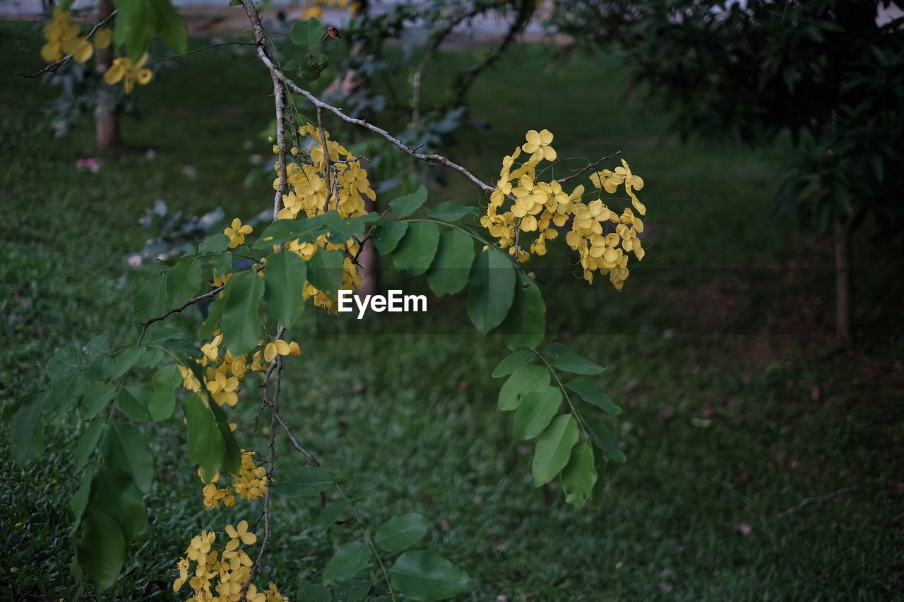 growth, yellow, nature, leaf, beauty in nature, flower, plant, outdoors, green color, day, fragility, freshness, no people, tree, branch, close-up