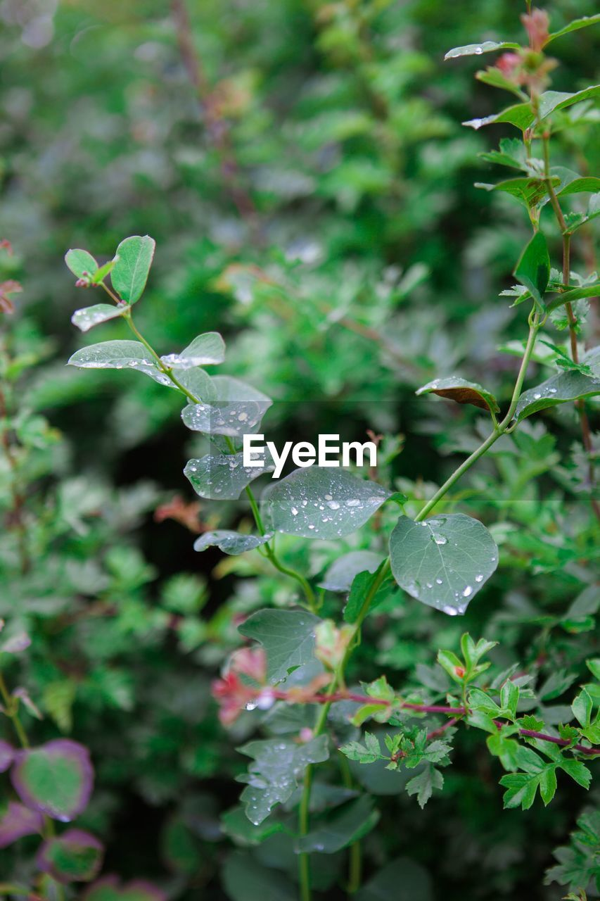growth, plant, leaf, plant part, green color, beauty in nature, close-up, nature, day, vulnerability, fragility, focus on foreground, freshness, no people, wet, flower, selective focus, drop, outdoors, water, rain, purity, dew, raindrop