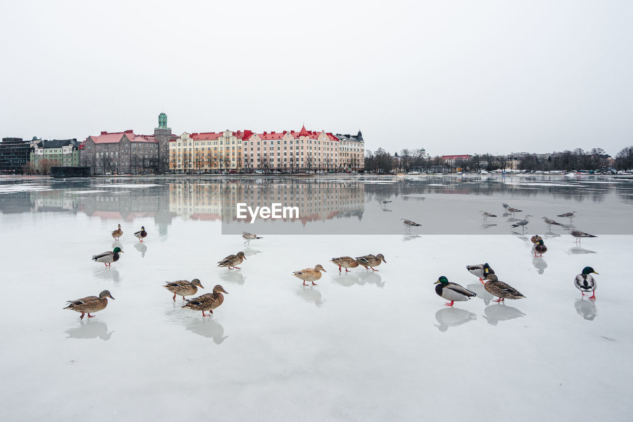water, bird, group of animals, vertebrate, lake, animal themes, large group of animals, animal, animals in the wild, animal wildlife, sky, nature, winter, cold temperature, architecture, duck, built structure, poultry, outdoors, flock of birds