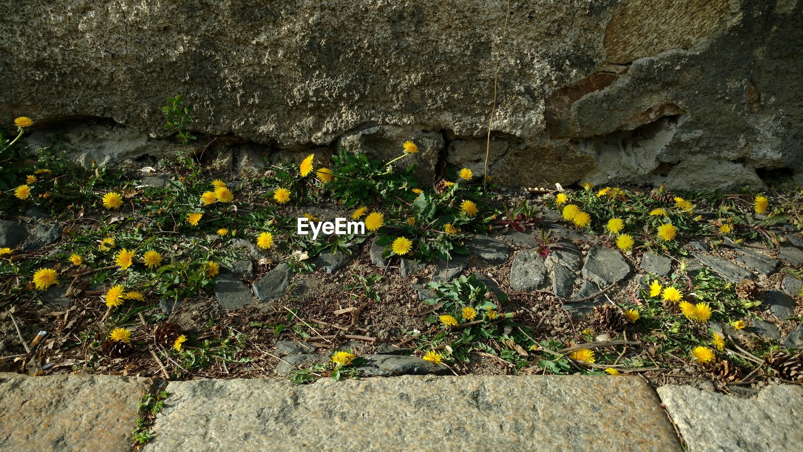 HIGH ANGLE VIEW OF FLOWERING PLANTS ON ROCK