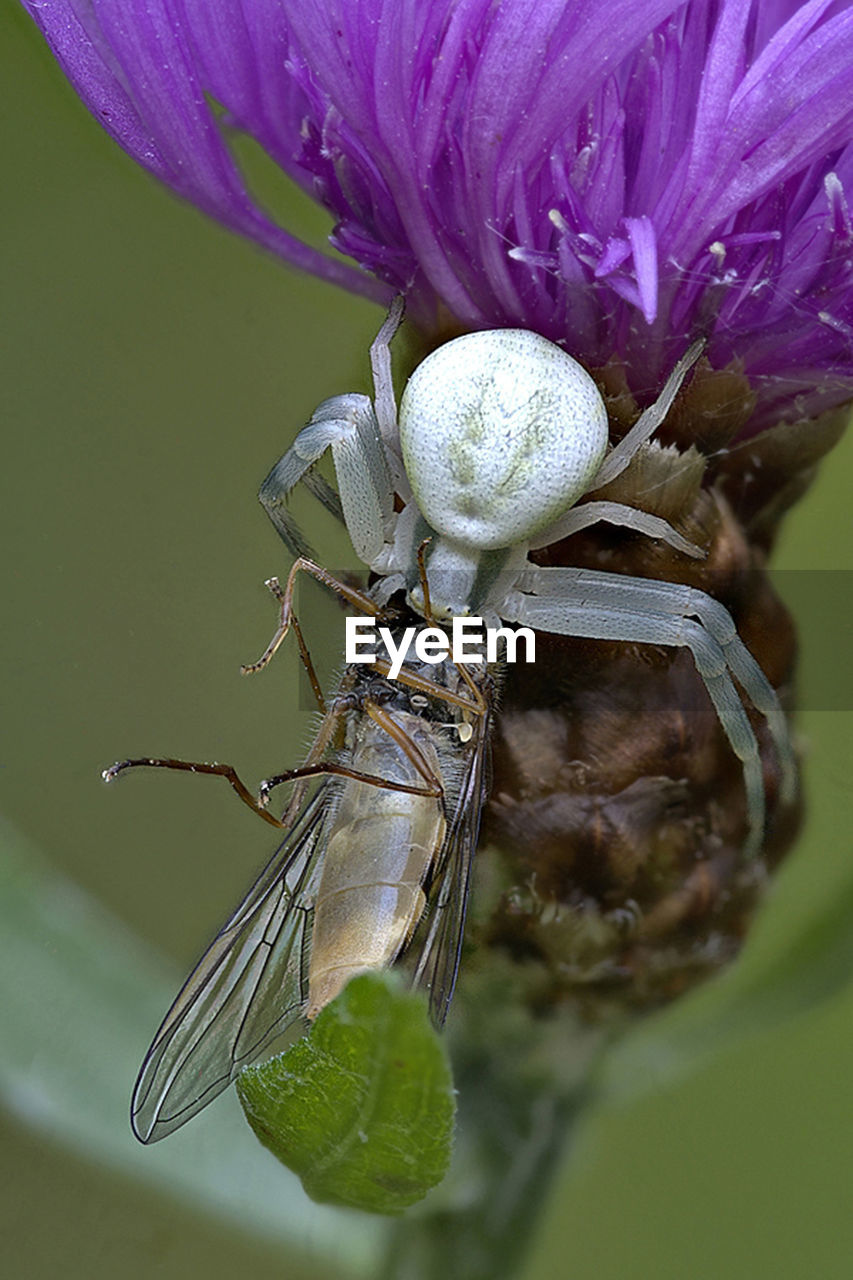 invertebrate, insect, animals in the wild, animal themes, animal wildlife, animal, one animal, close-up, flower, flowering plant, plant, beauty in nature, nature, fragility, focus on foreground, no people, vulnerability, petal, animal wing, day, flower head, purple, animal eye, pollination