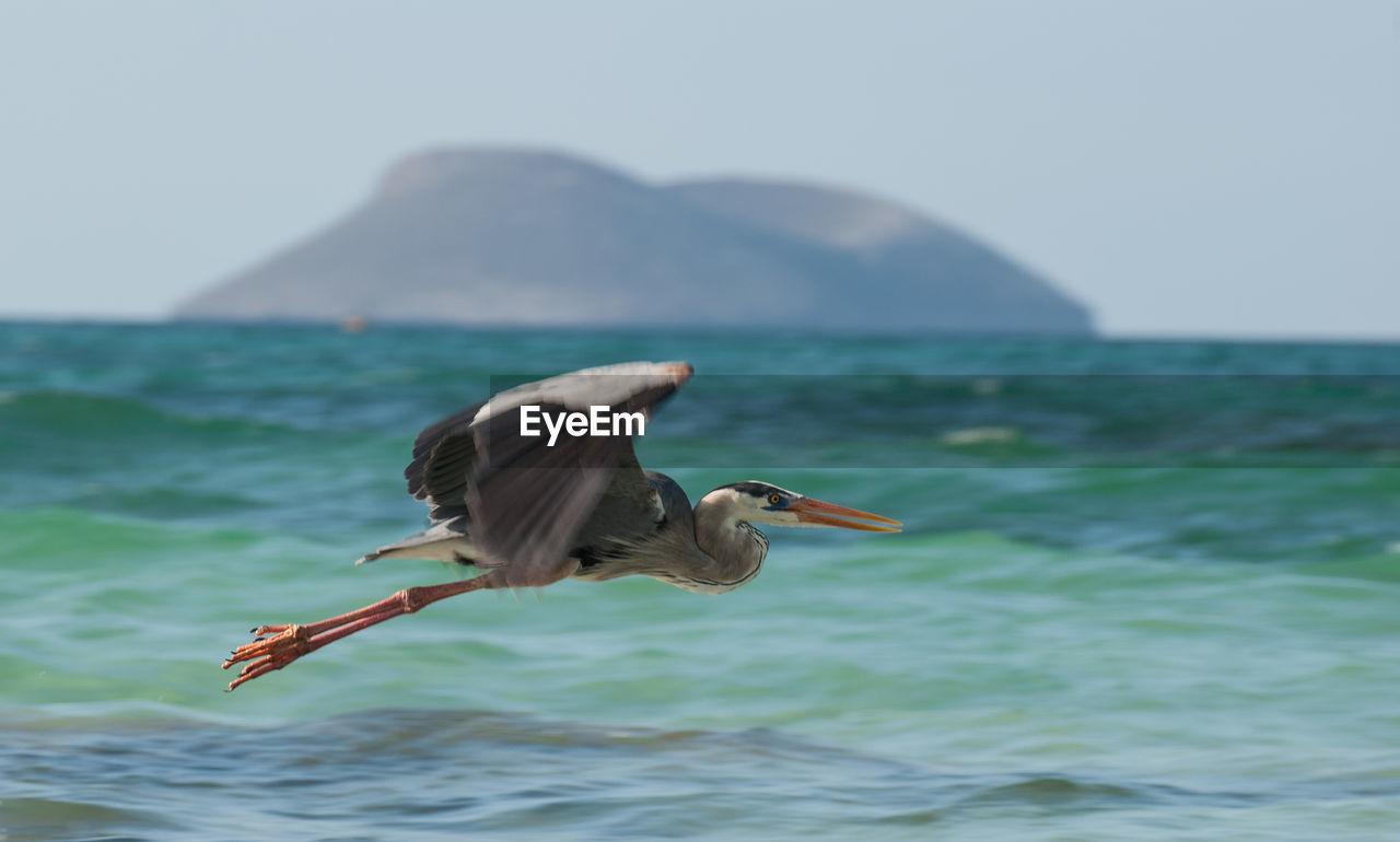 Heron Flying Over Sea Against Sky