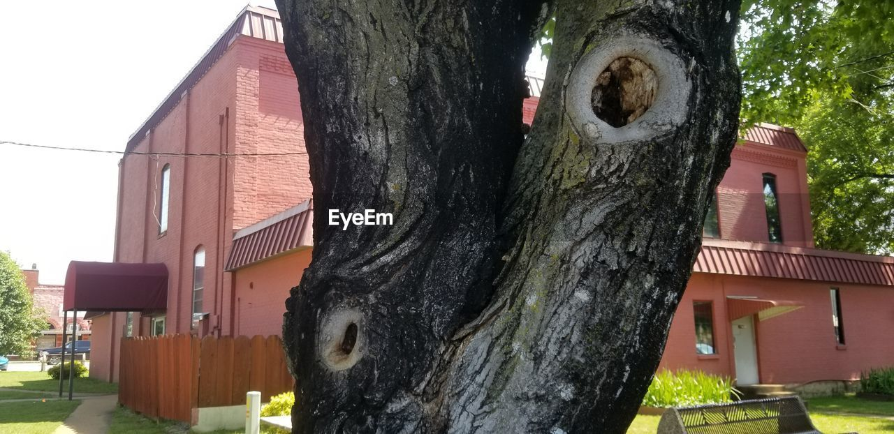built structure, architecture, building exterior, tree, plant, tree trunk, day, trunk, focus on foreground, no people, building, nature, outdoors, close-up, house, old, birdhouse, belief, front or back yard, wood - material