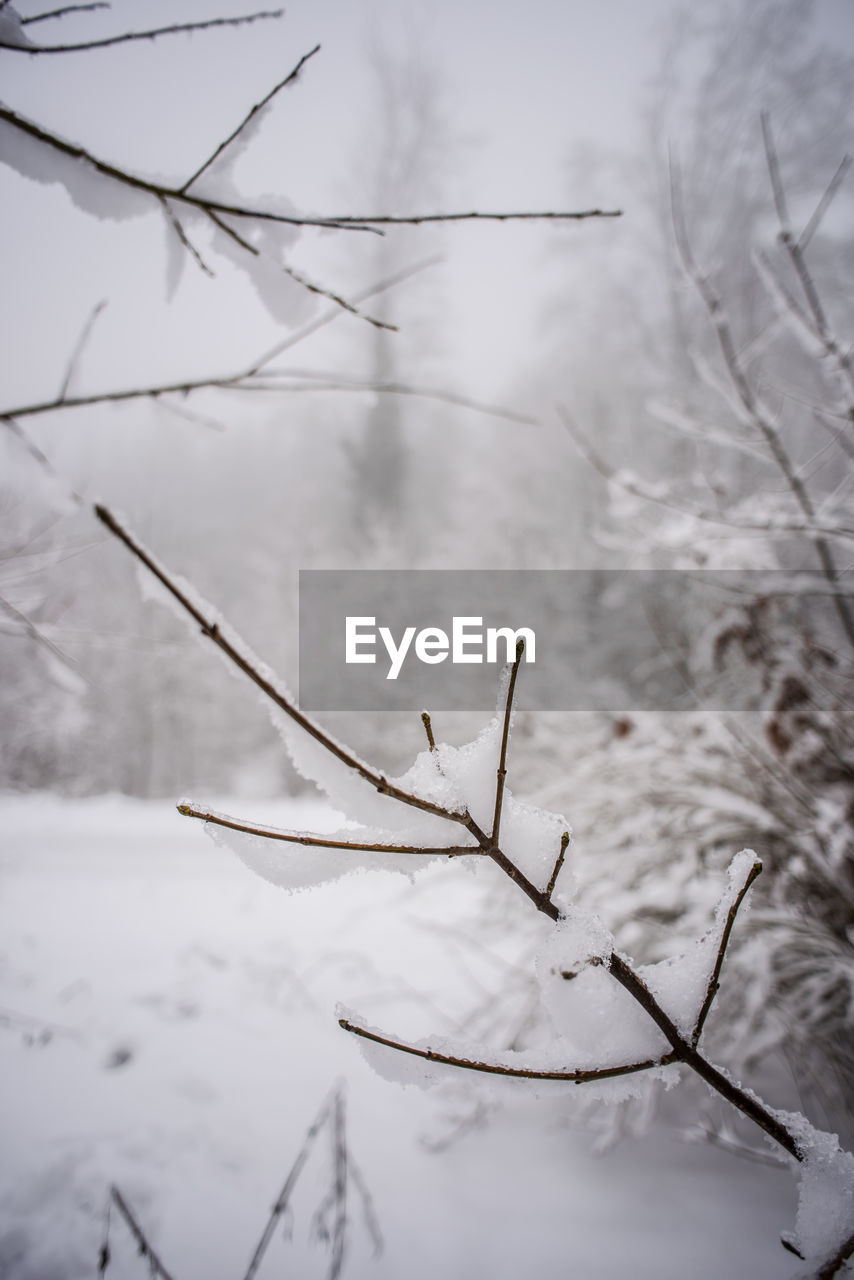 winter, cold temperature, snow, nature, weather, no people, day, focus on foreground, outdoors, dead plant, dried plant, close-up, beauty in nature, sky