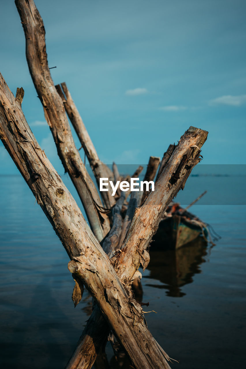 water, wood - material, nature, tree, tranquility, trunk, plant, day, no people, focus on foreground, sky, tree trunk, scenics - nature, wood, dead plant, beauty in nature, sea, tranquil scene, outdoors, driftwood, bark