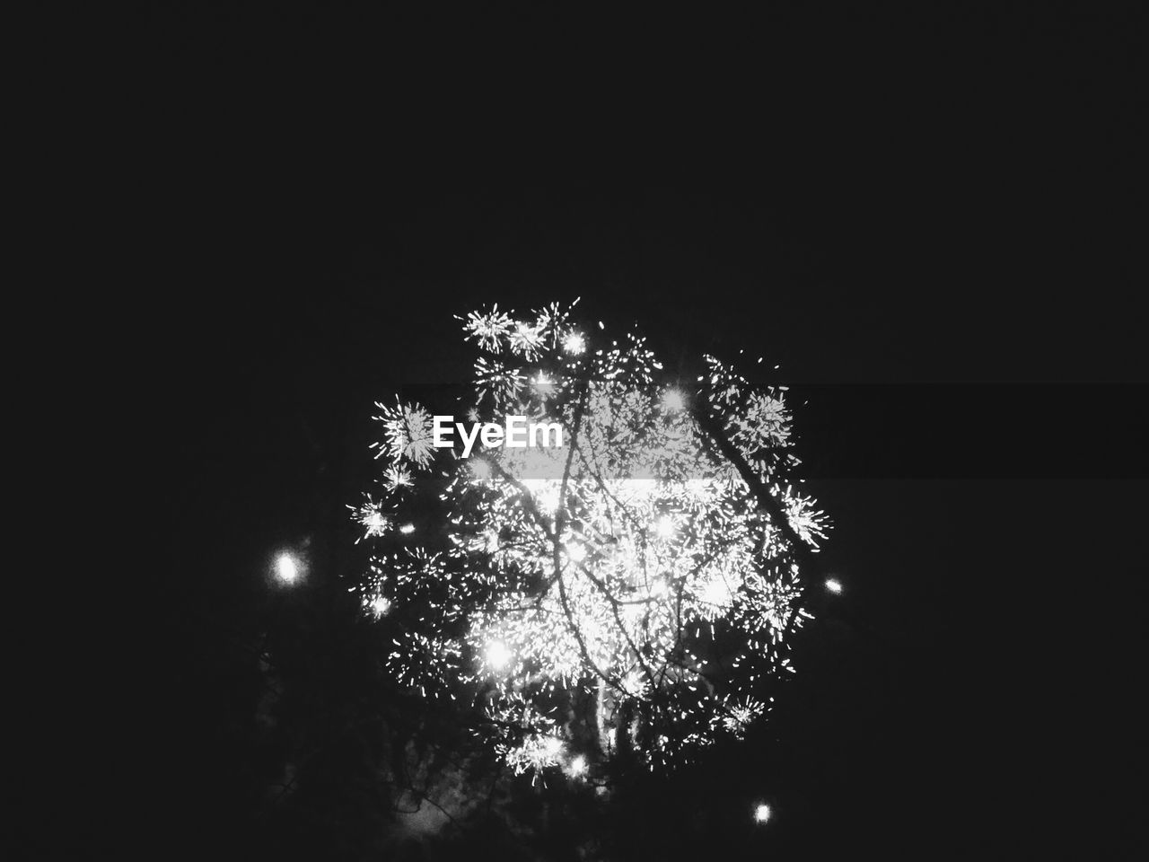 low angle view, night, celebration, tree, firework display, illuminated, firework - man made object, exploding, no people, outdoors, clear sky, arts culture and entertainment, sky, firework, nature