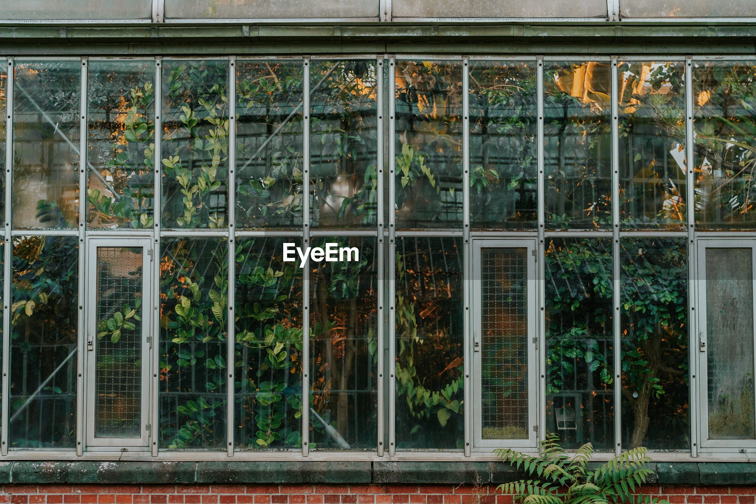Full frame shot of glass window of building