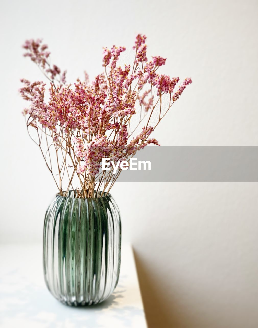 plant, indoors, flower, flowering plant, vase, freshness, still life, no people, fragility, close-up, beauty in nature, vulnerability, table, nature, decoration, copy space, white background, pink color, flower head, container, flower arrangement