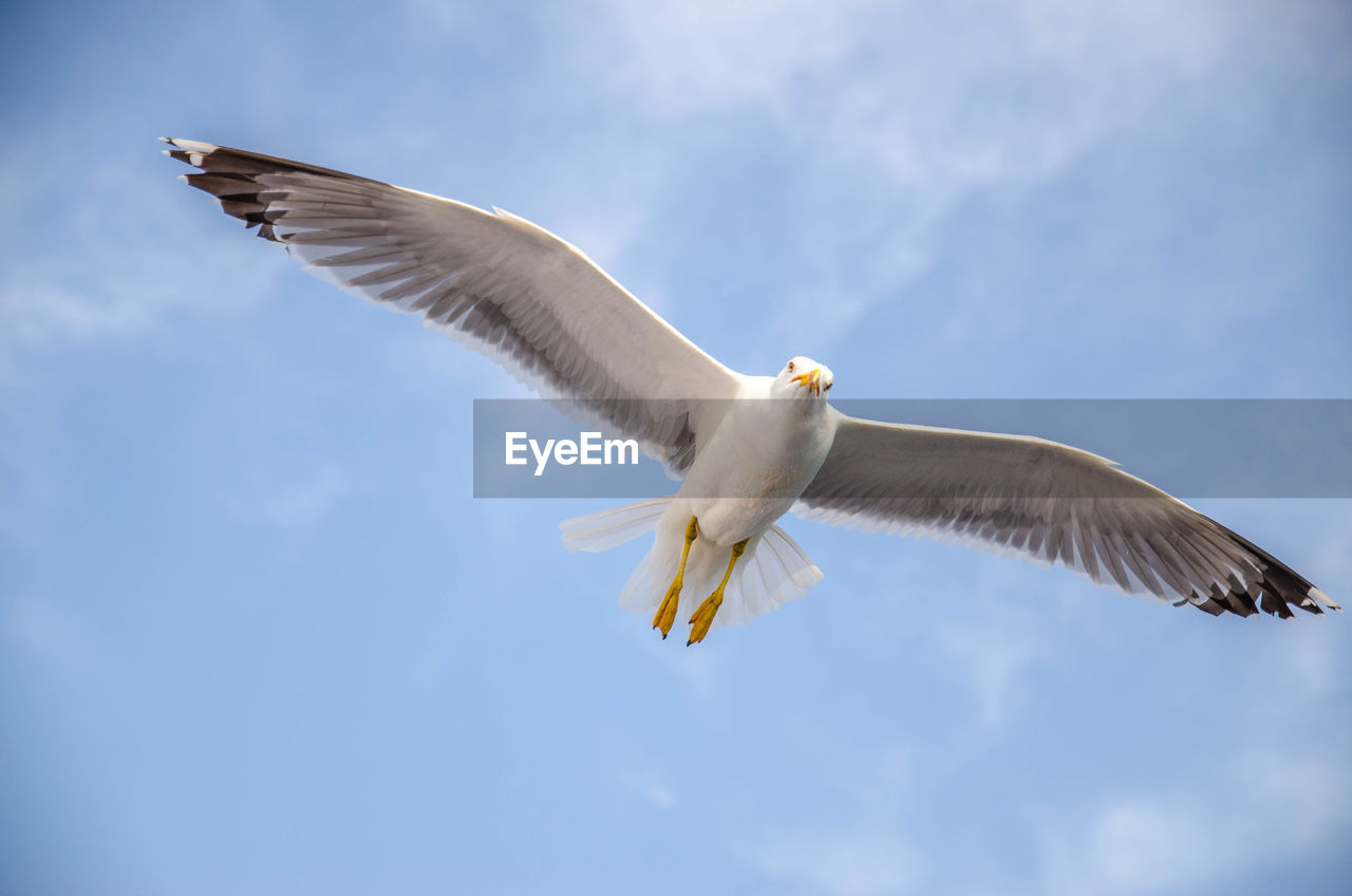 spread wings, animal wildlife, animal, bird, vertebrate, animals in the wild, flying, animal themes, sky, low angle view, one animal, cloud - sky, mid-air, seagull, motion, day, nature, white color, no people, outdoors, directly below, eagle