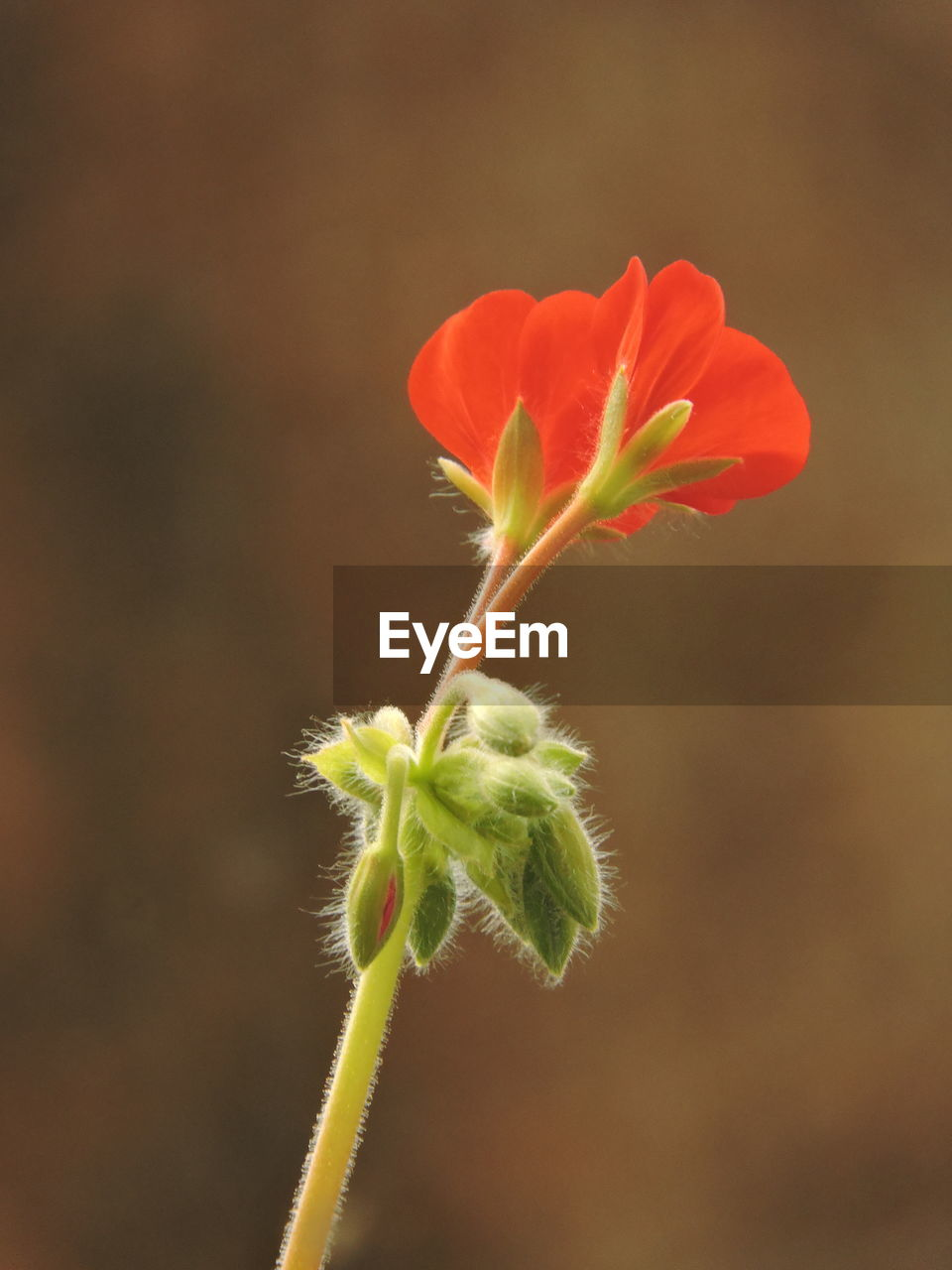 plant, flowering plant, flower, vulnerability, close-up, beauty in nature, growth, fragility, freshness, nature, focus on foreground, plant stem, no people, beginnings, new life, bud, petal, outdoors, inflorescence, flower head, sepal