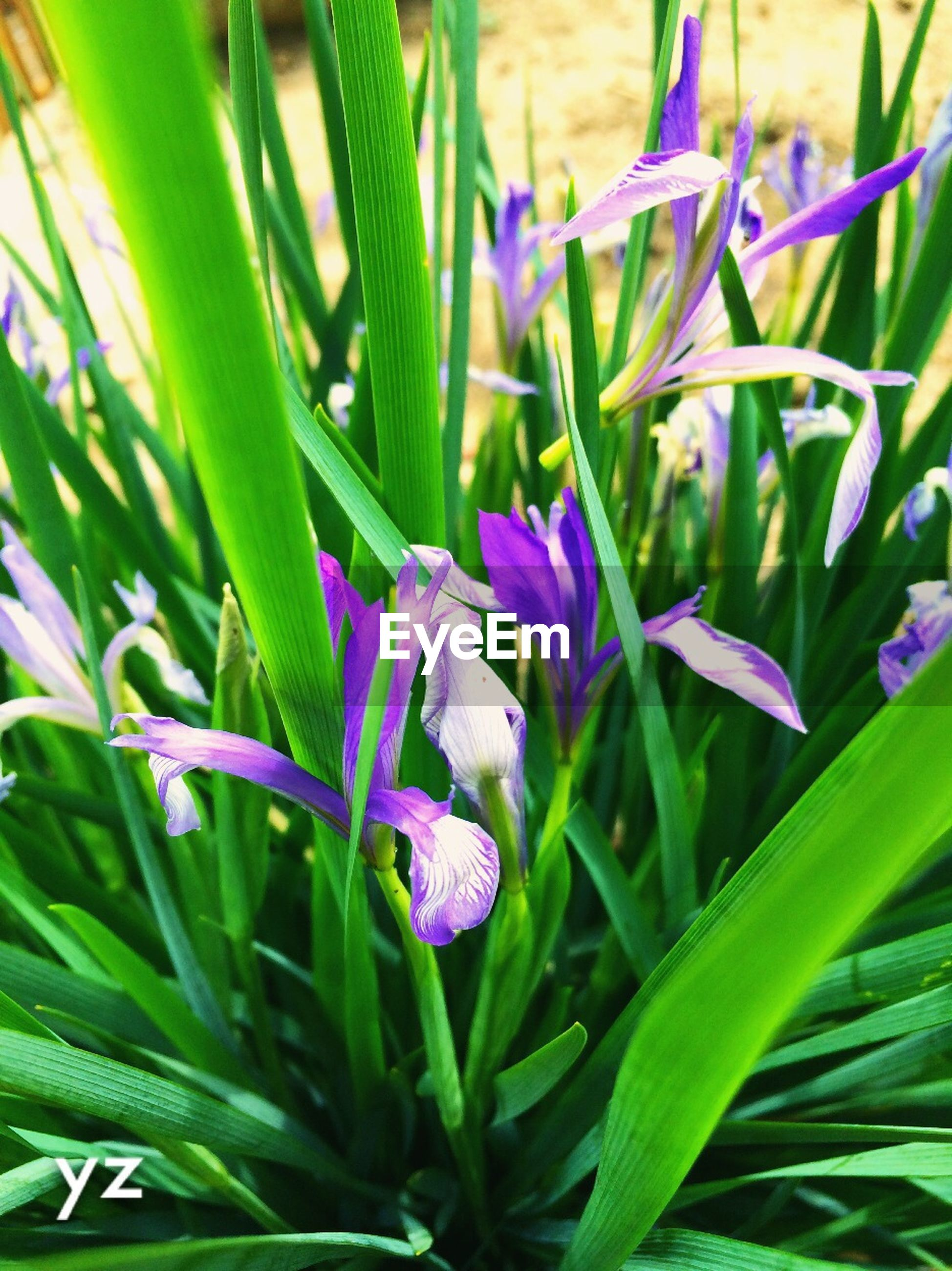 flower, freshness, growth, purple, fragility, plant, leaf, beauty in nature, petal, nature, flower head, blooming, green color, close-up, stem, in bloom, focus on foreground, blossom, blue, botany