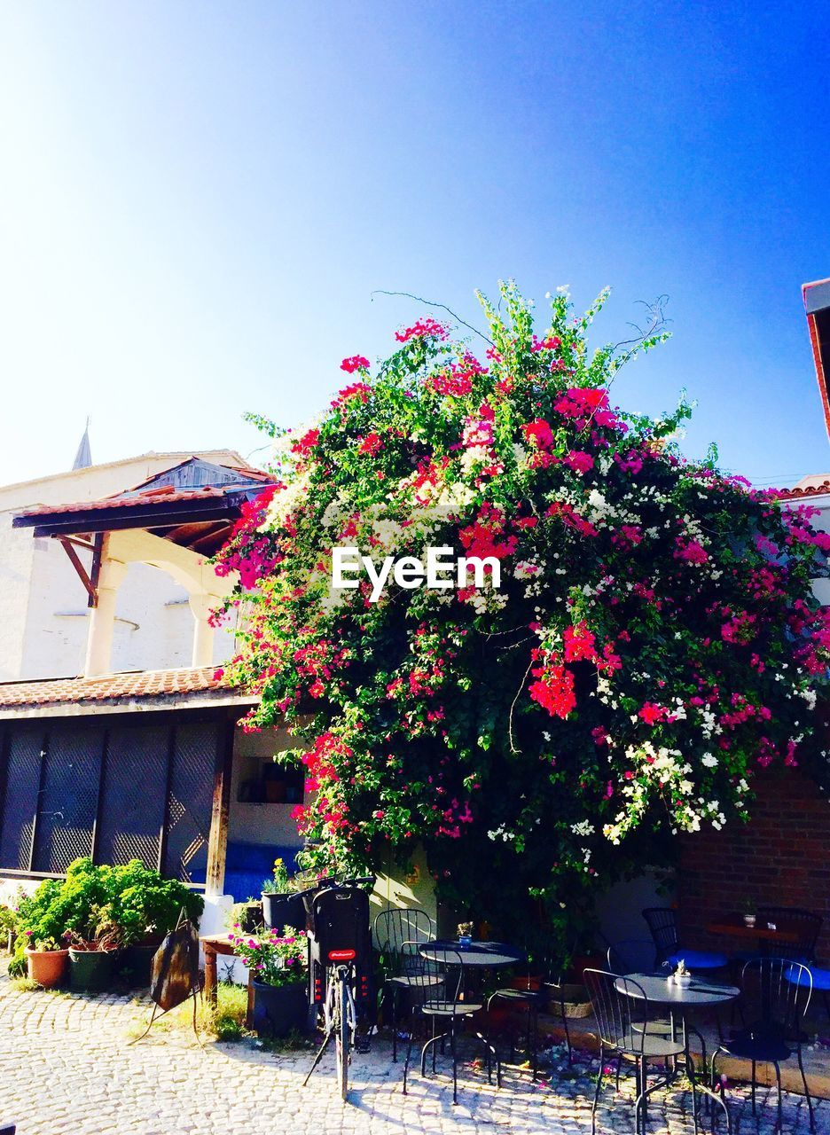 flower, growth, outdoors, building exterior, architecture, built structure, day, plant, no people, nature, clear sky, window box, freshness