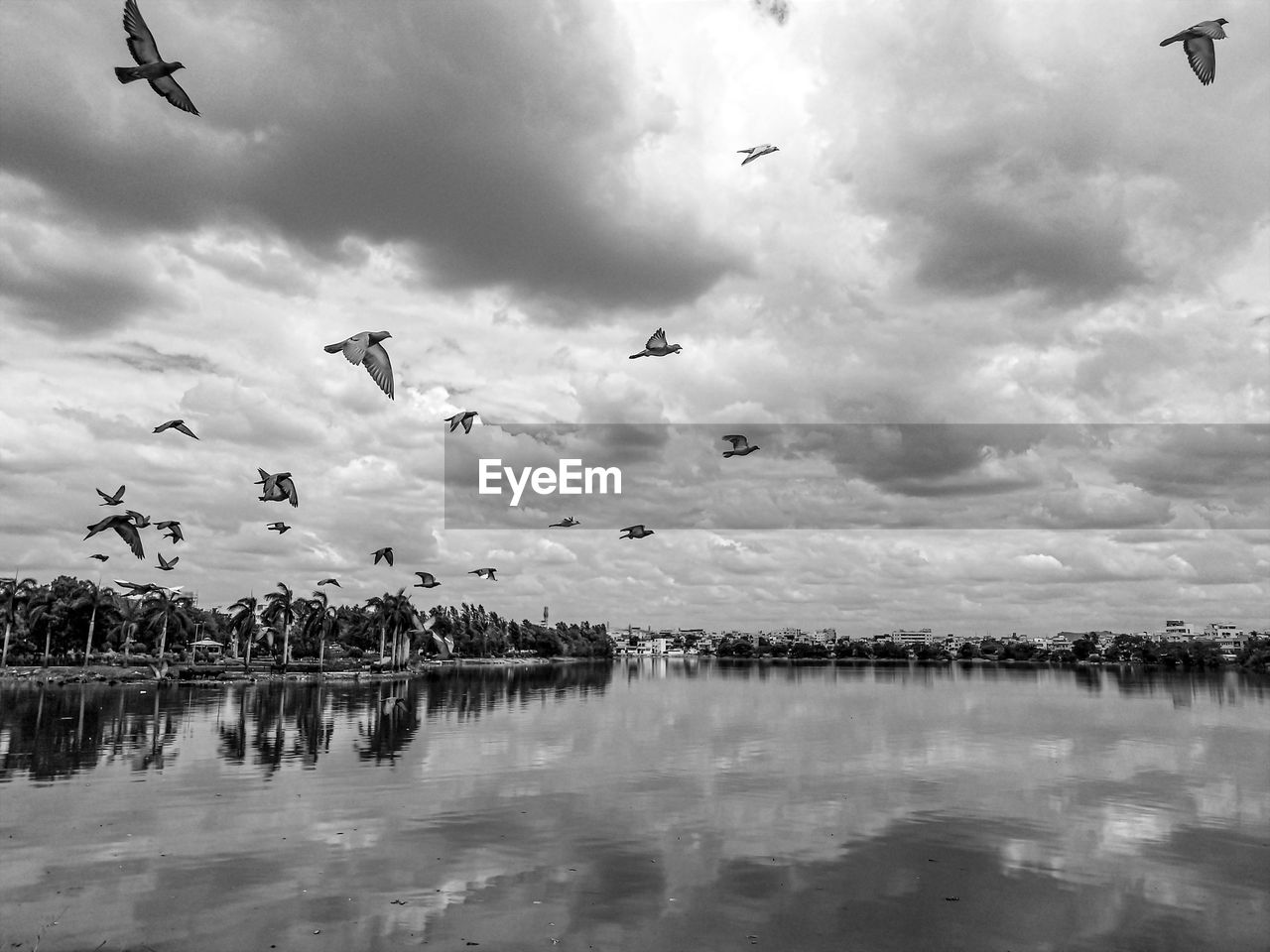 animal themes, vertebrate, animal, water, animals in the wild, cloud - sky, bird, animal wildlife, sky, group of animals, waterfront, reflection, flying, beauty in nature, large group of animals, nature, lake, mid-air, no people, outdoors, flock of birds