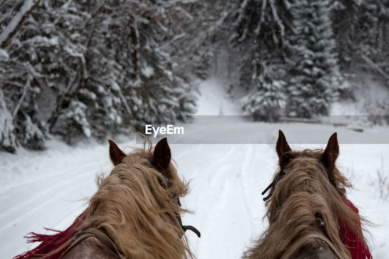 Horses on snow field against trees during winter