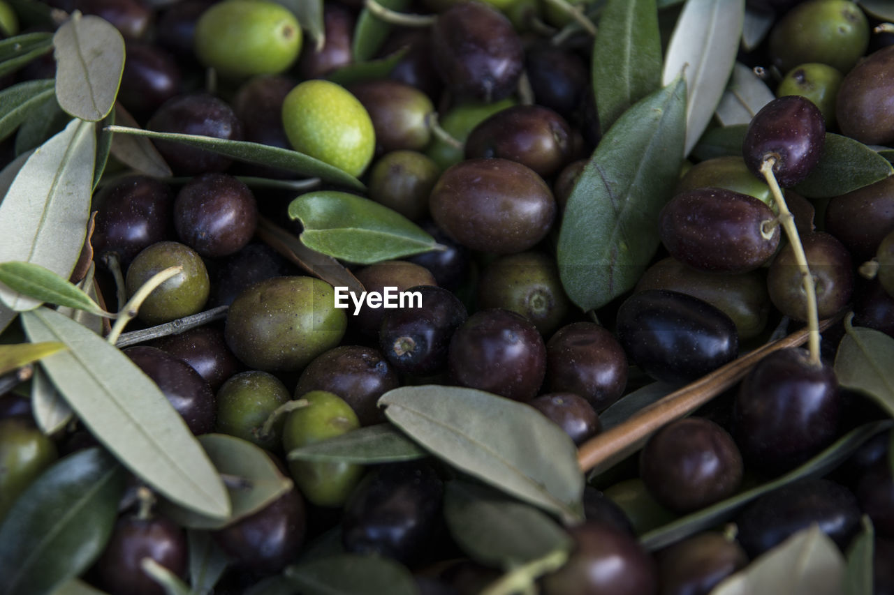 food and drink, food, healthy eating, freshness, wellbeing, green color, fruit, no people, large group of objects, leaf, plant part, close-up, still life, abundance, day, high angle view, olive, selective focus, full frame, market, ripe