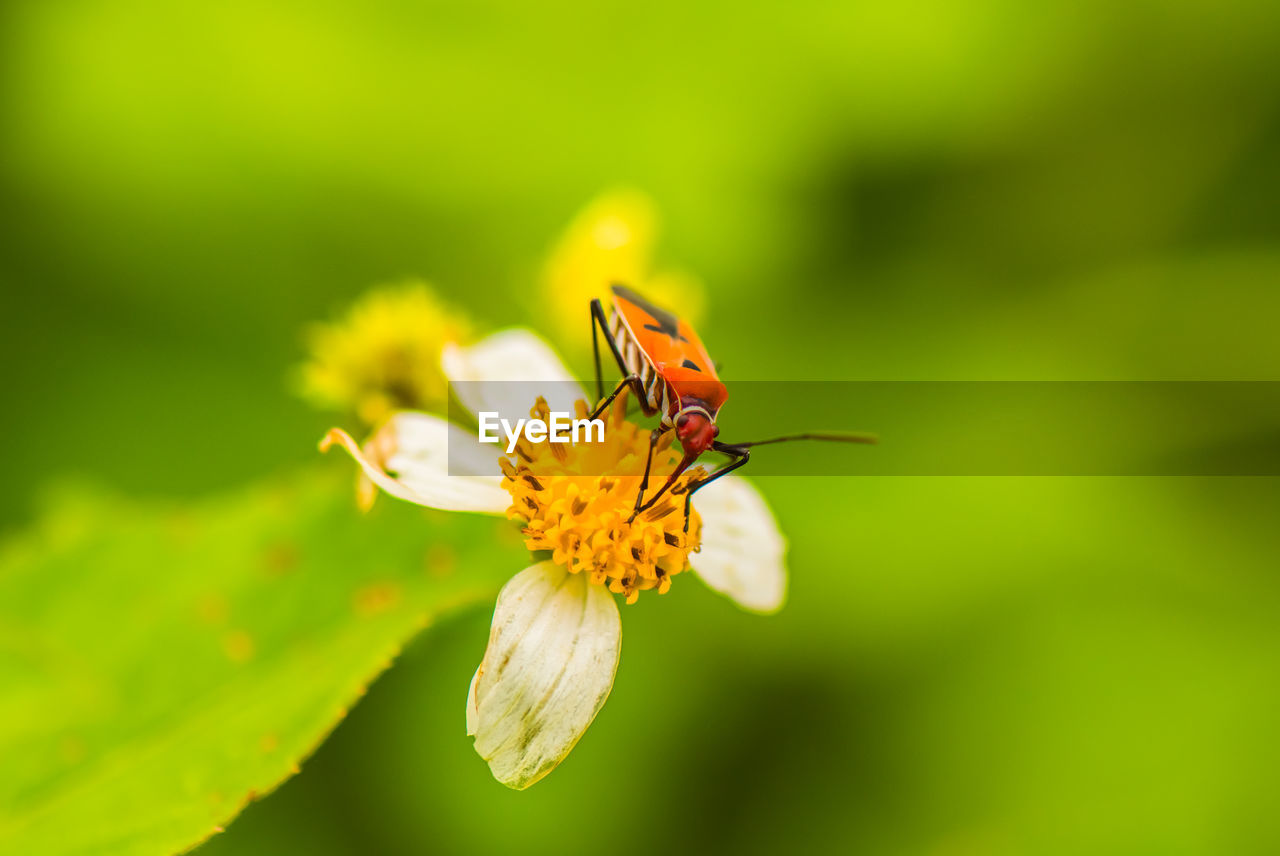 flower, invertebrate, insect, animal wildlife, flowering plant, animal, animal themes, animals in the wild, beauty in nature, fragility, vulnerability, one animal, petal, plant, close-up, freshness, flower head, growth, inflorescence, nature, no people, pollination, outdoors, pollen, animal wing