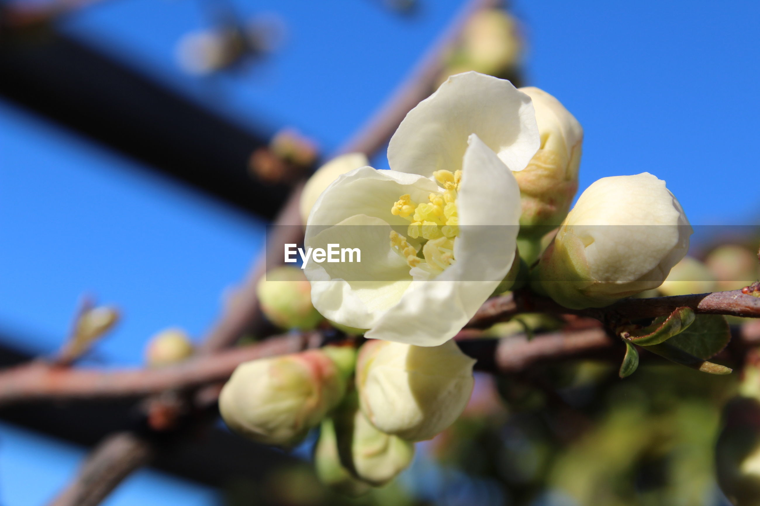flower, fragility, nature, growth, blue, beauty in nature, freshness, close-up, petal, sunlight, springtime, blossom, flower head, no people, plant, blooming, outdoors, day, sky, plum blossom