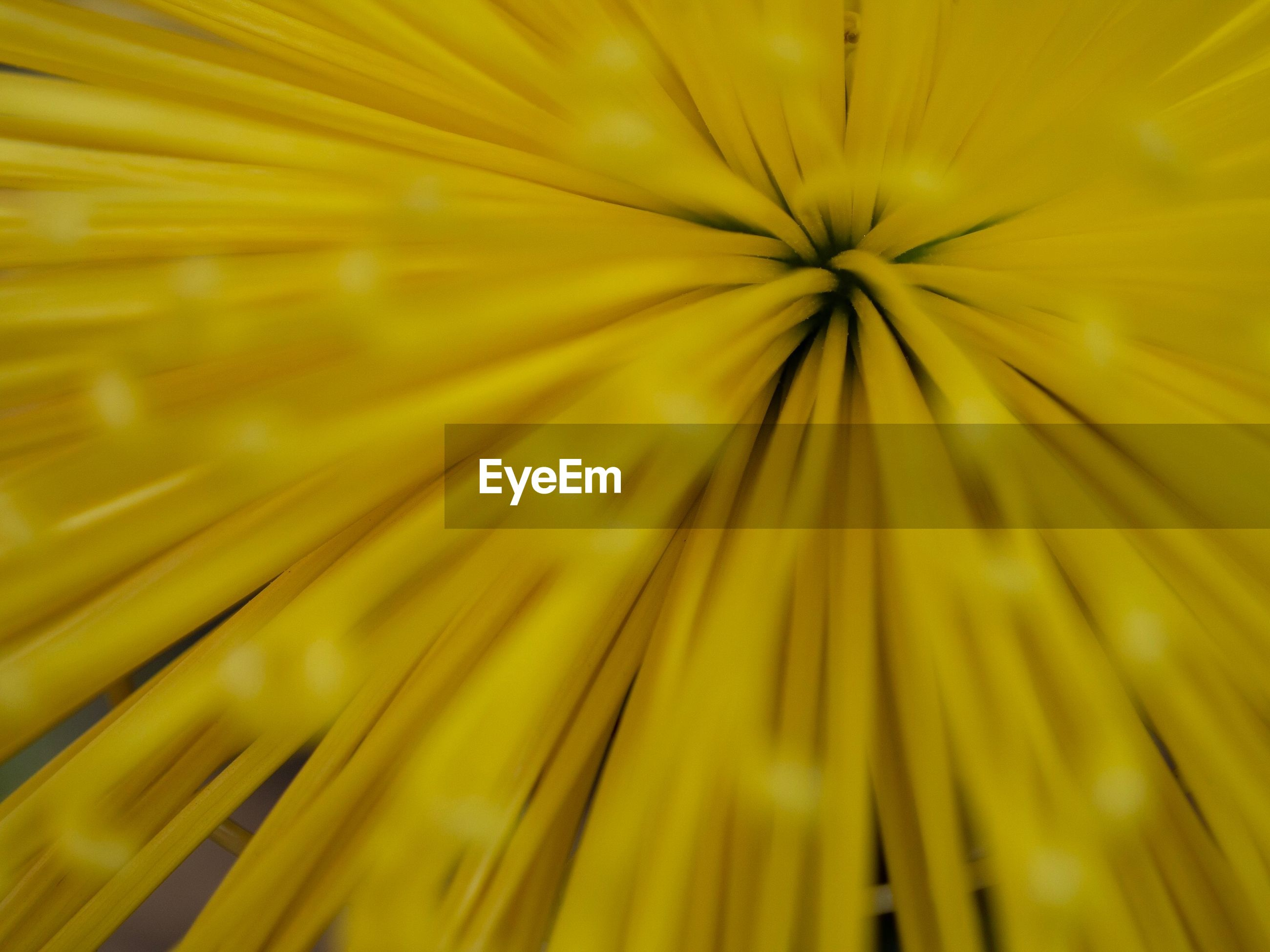 CLOSE-UP OF YELLOW DANDELION