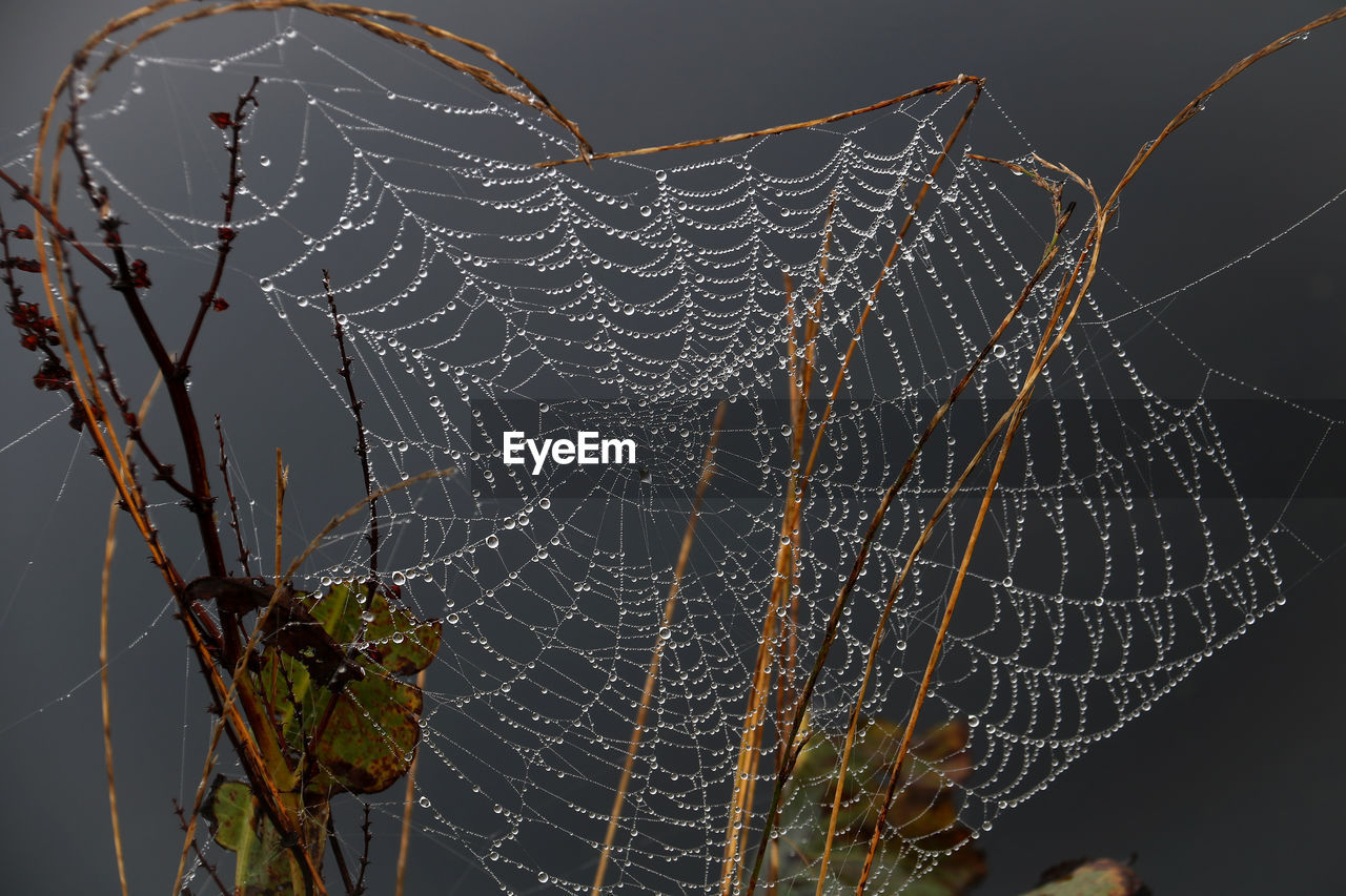 spider web, fragility, vulnerability, close-up, focus on foreground, no people, nature, beauty in nature, drop, complexity, spider, outdoors, wet, natural pattern, pattern, plant, water, day, intricacy, dew, raindrop