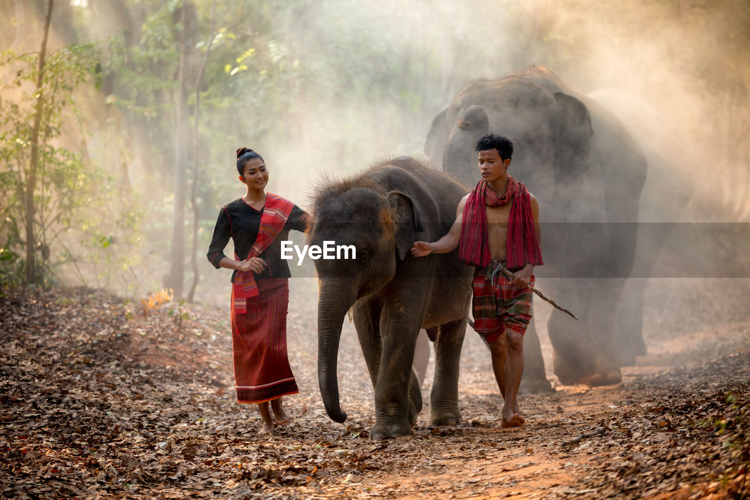 People with elephants walking in forest