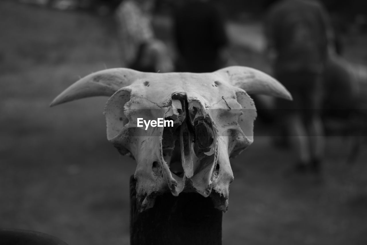 focus on foreground, bone, close-up, no people, animal skull, animal body part, body part, day, nature, animal bone, land, animal skeleton, animal, outdoors, animal themes, wood - material, still life