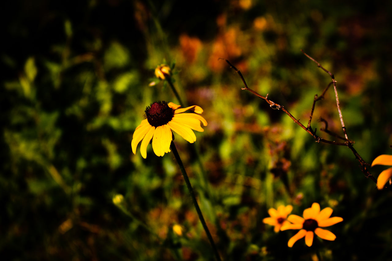 flowering plant, flower, plant, fragility, vulnerability, freshness, beauty in nature, petal, growth, yellow, close-up, focus on foreground, inflorescence, flower head, nature, no people, plant stem, day, outdoors, selective focus, pollen