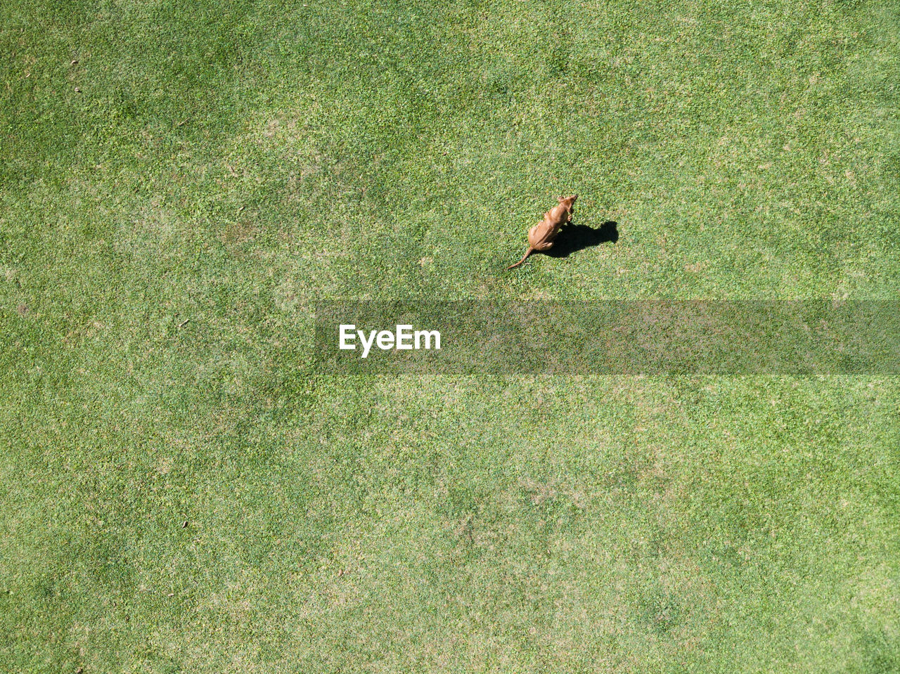 High angle view of dog on field