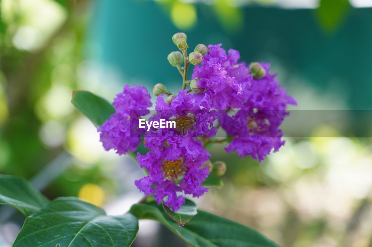 flowering plant, flower, freshness, vulnerability, plant, close-up, fragility, beauty in nature, focus on foreground, growth, purple, leaf, plant part, day, petal, nature, inflorescence, flower head, outdoors, no people, lilac