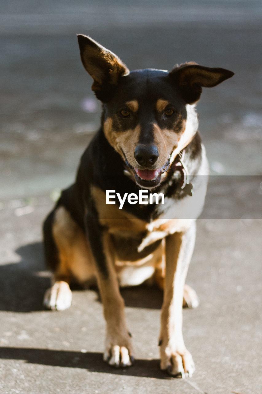 CLOSE-UP PORTRAIT OF DOG SITTING ON FLOOR
