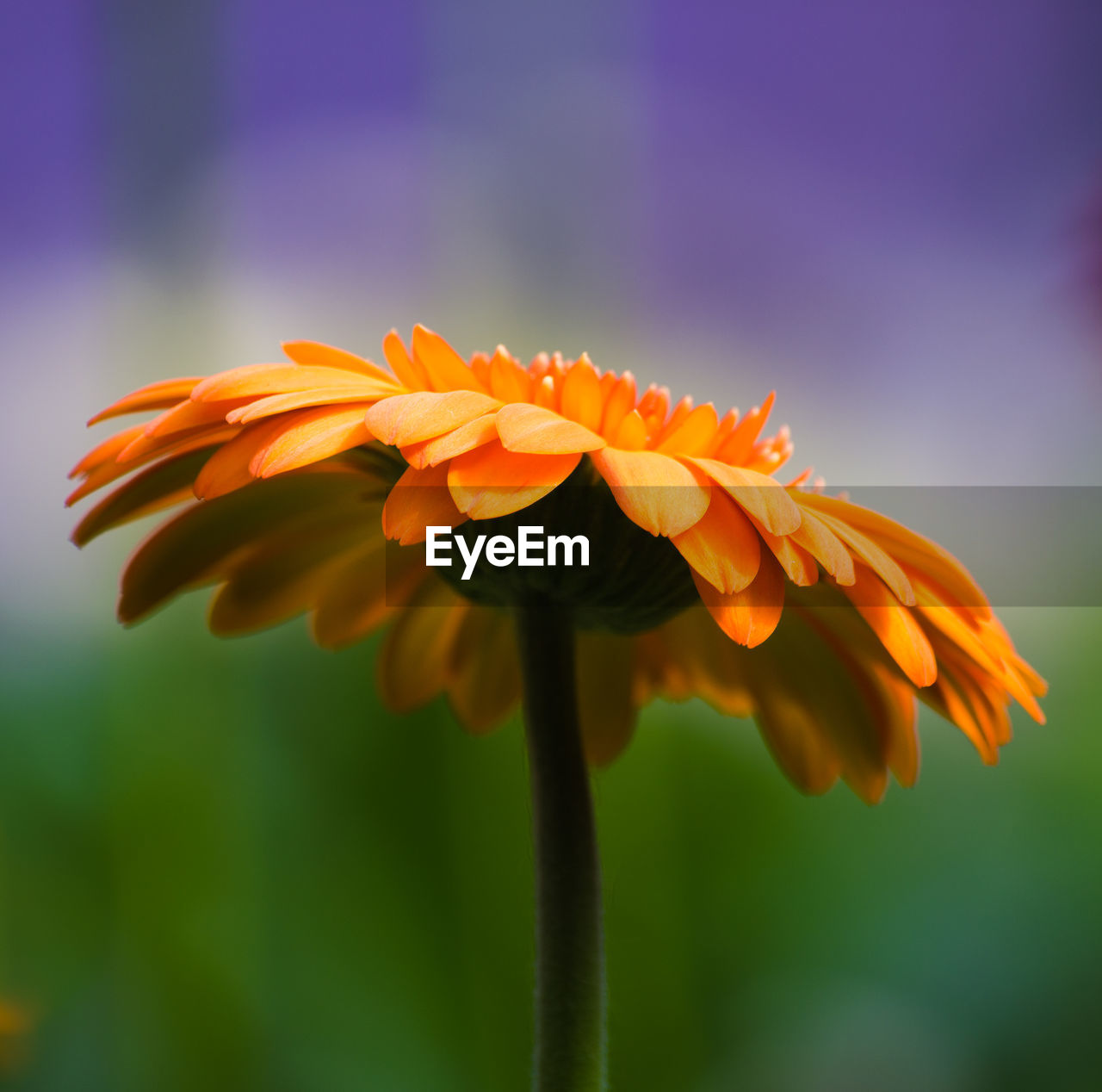 flower, petal, fragility, growth, freshness, beauty in nature, nature, flower head, focus on foreground, blooming, close-up, plant, yellow, no people, outdoors, day