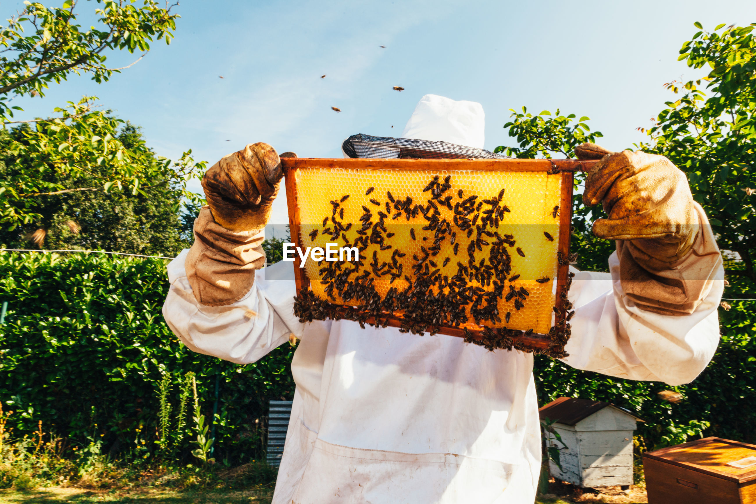 Man holding bees