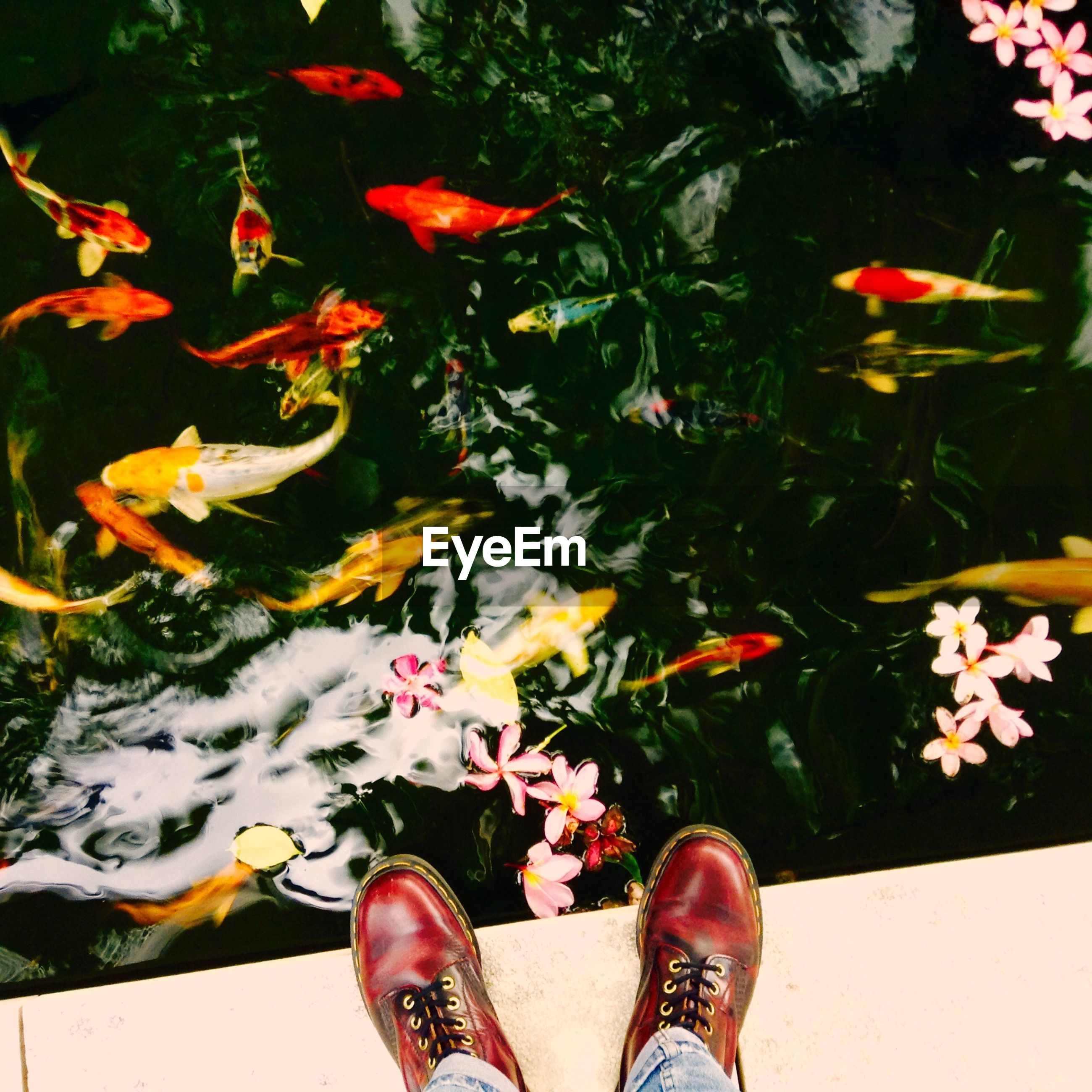 low section, person, shoe, personal perspective, human foot, standing, footwear, flower, leaf, high angle view, lifestyles, unrecognizable person, autumn, water, leisure activity, multi colored