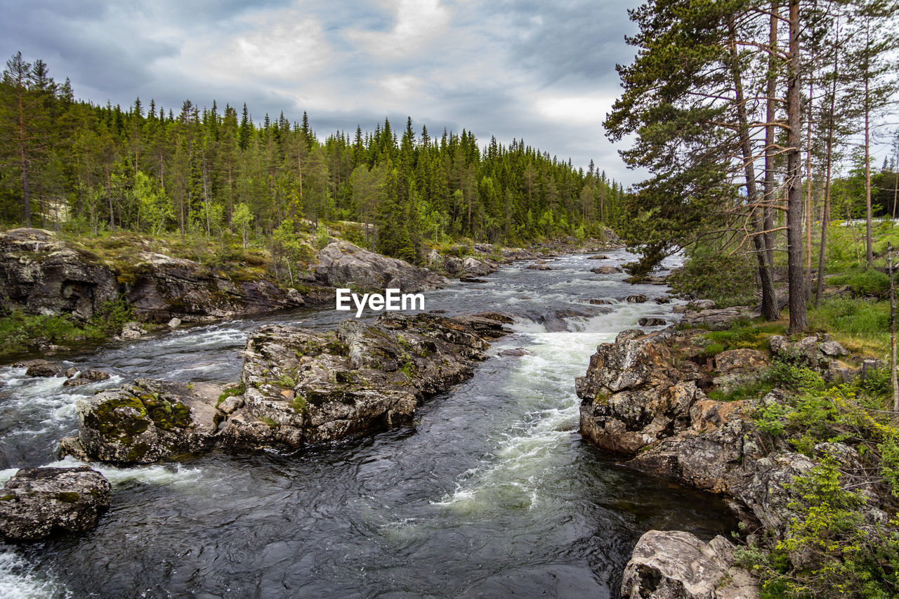 tree, plant, beauty in nature, water, scenics - nature, sky, flowing water, rock, nature, tranquility, tranquil scene, forest, no people, non-urban scene, solid, land, growth, river, cloud - sky, flowing, outdoors, stream - flowing water