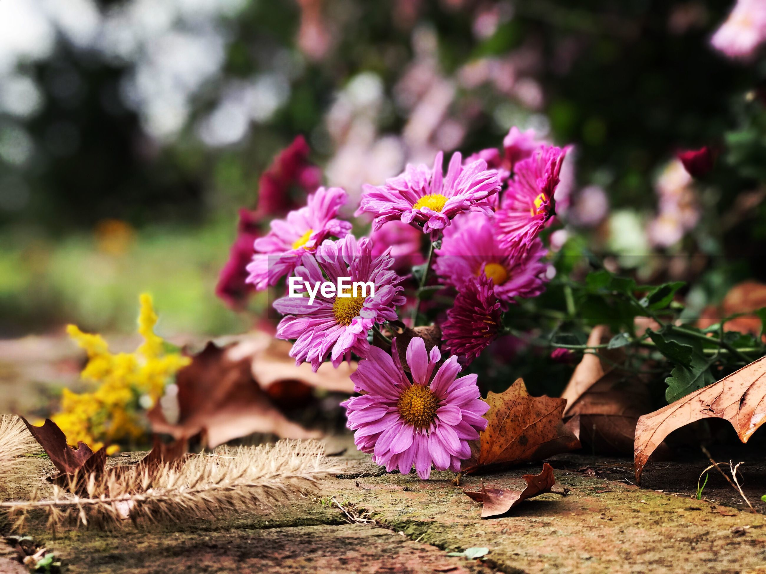 flower, fragility, nature, day, outdoors, petal, beauty in nature, no people, growth, focus on foreground, close-up, freshness, plant, flower head