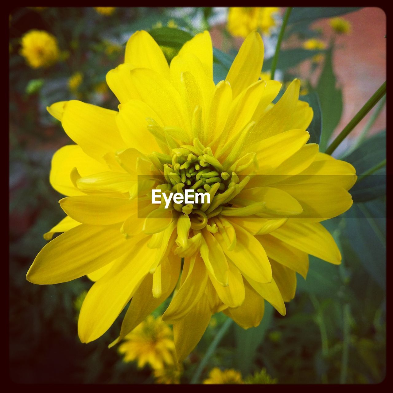 flower, yellow, petal, fragility, nature, beauty in nature, freshness, flower head, growth, plant, close-up, no people, outdoors, blooming, stamen, day