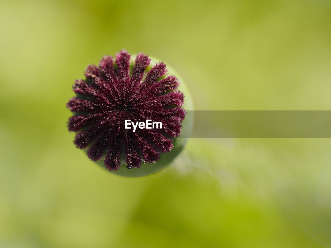 nature, fragility, plant, flower, growth, focus on foreground, no people, beauty in nature, outdoors, day, close-up, freshness, flower head
