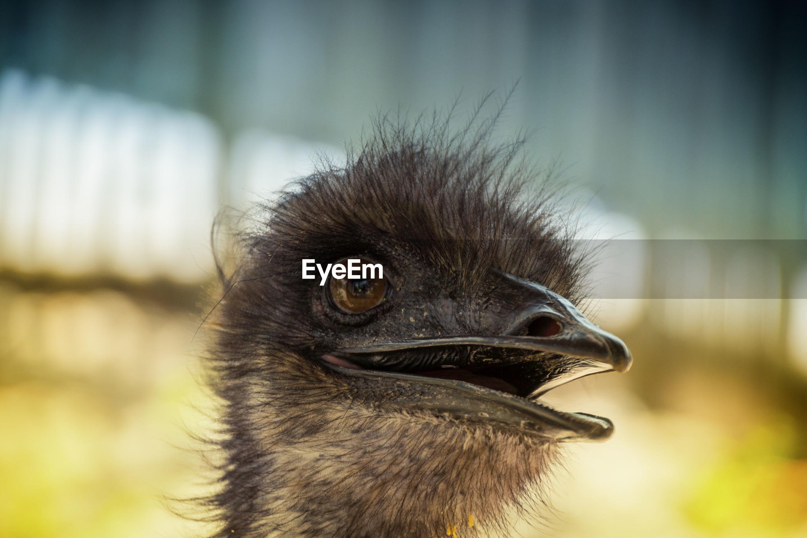 Close-up of ostrich against blurred background