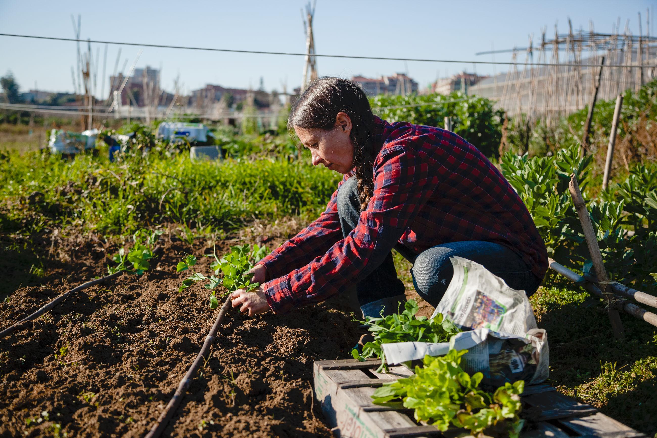 Woman gardening in field