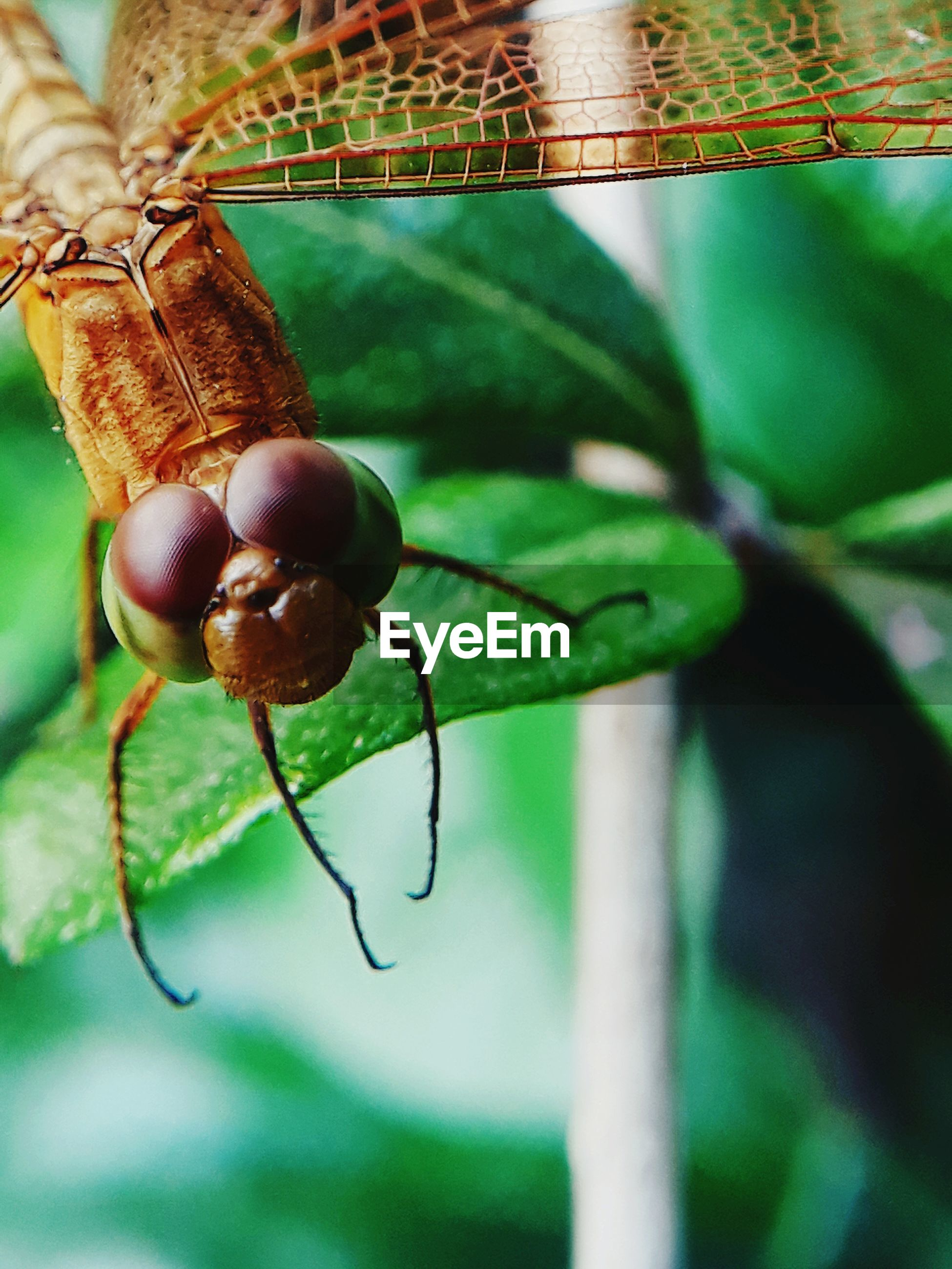 one animal, close-up, animal themes, animal, focus on foreground, leaf, animal wildlife, plant part, nature, insect, day, invertebrate, animals in the wild, plant, no people, green color, food, outdoors, food and drink, growth