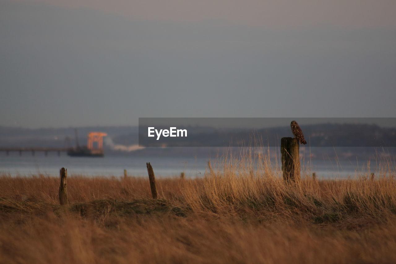 Owl On Wooden Post Against Sky