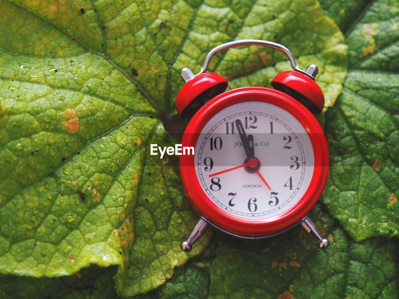 clock, alarm clock, time, green color, number, instrument of time, plant part, close-up, no people, red, leaf, nature, clock face, accuracy, minute hand, plant, outdoors, day, growth, focus on foreground, hour hand