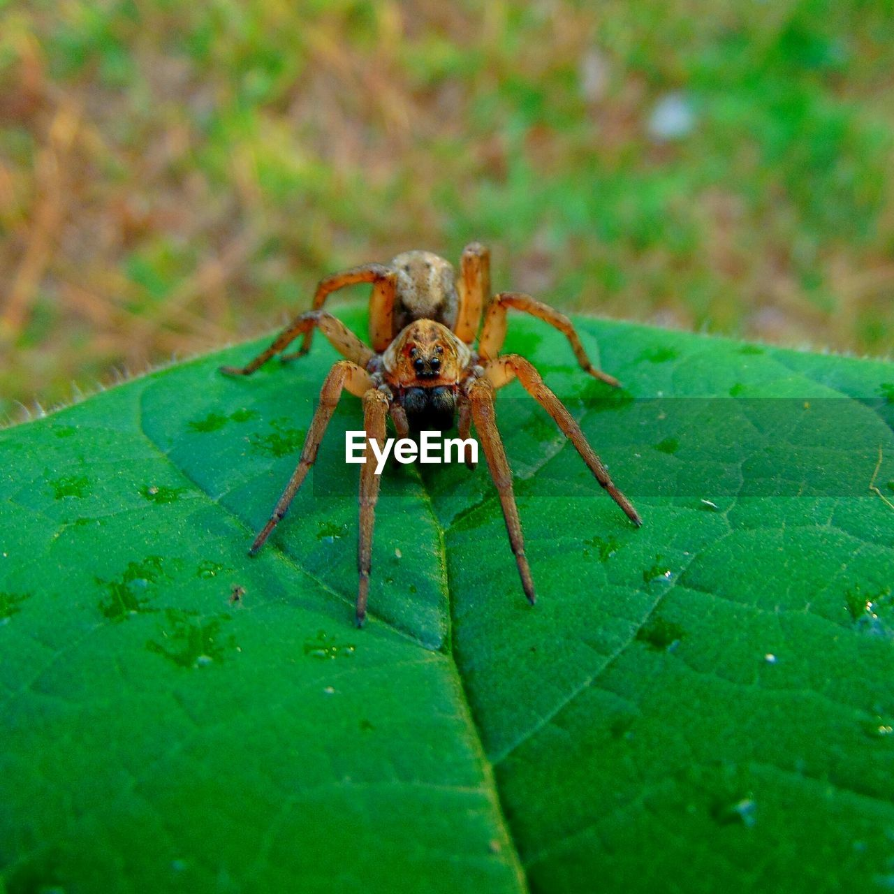 animal themes, invertebrate, one animal, animal, insect, animal wildlife, animals in the wild, green color, leaf, plant part, arachnid, spider, close-up, arthropod, no people, day, selective focus, nature, zoology, outdoors, animal leg