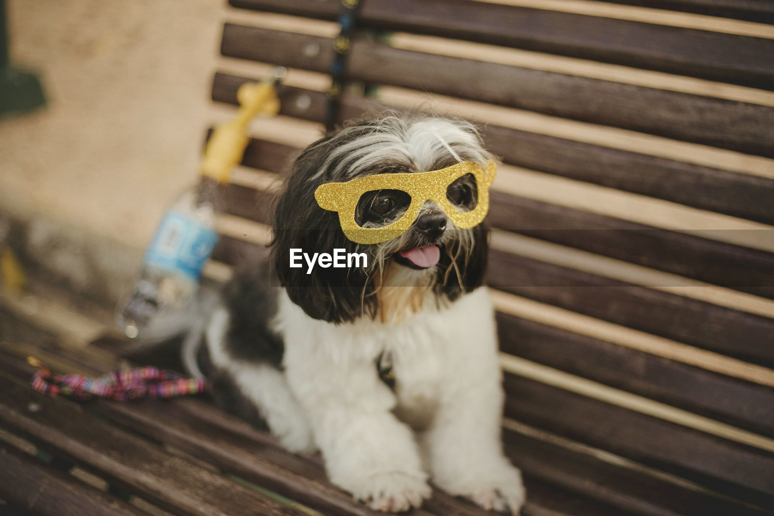 Close-up of dog wearing sunglasses on bench