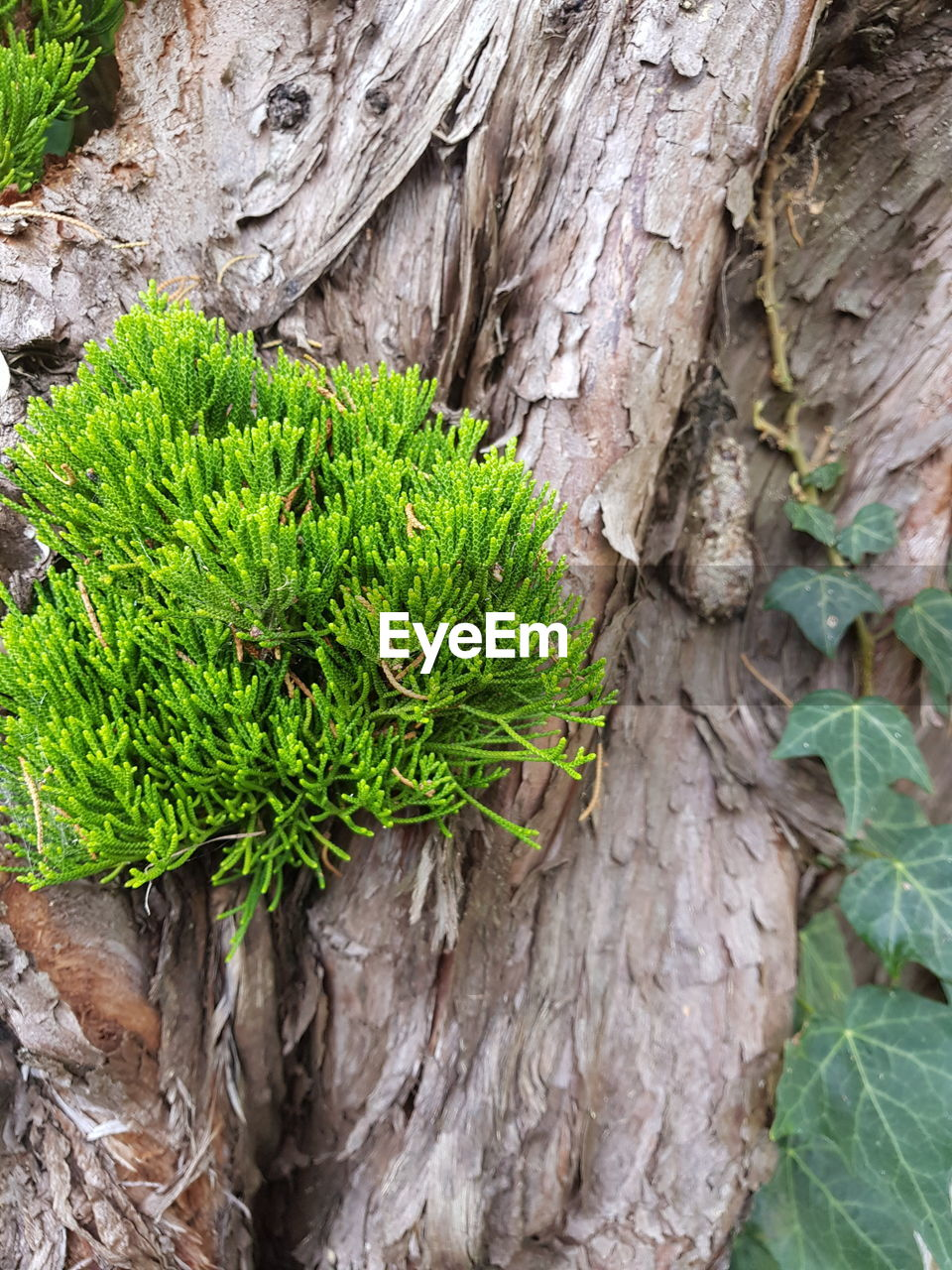 growth, plant, green color, tree trunk, nature, leaf, no people, day, outdoors, close-up, beauty in nature, tree, fragility, freshness