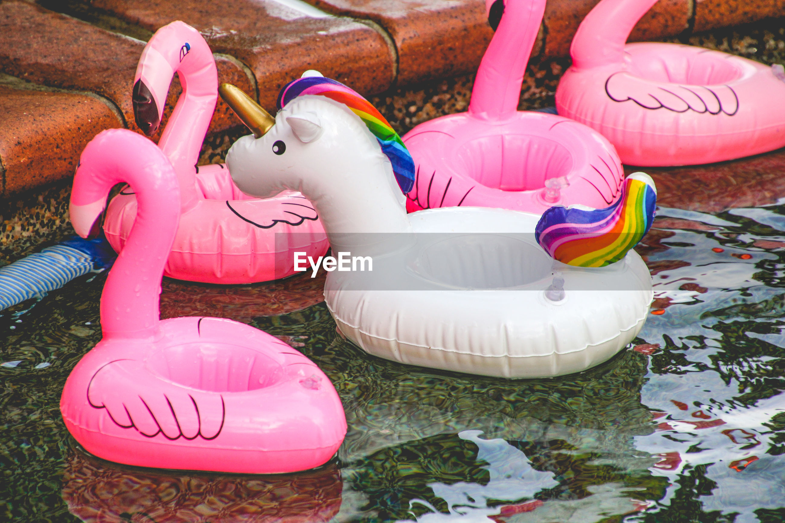 High angle view of animal inflatable rings in swimming pool