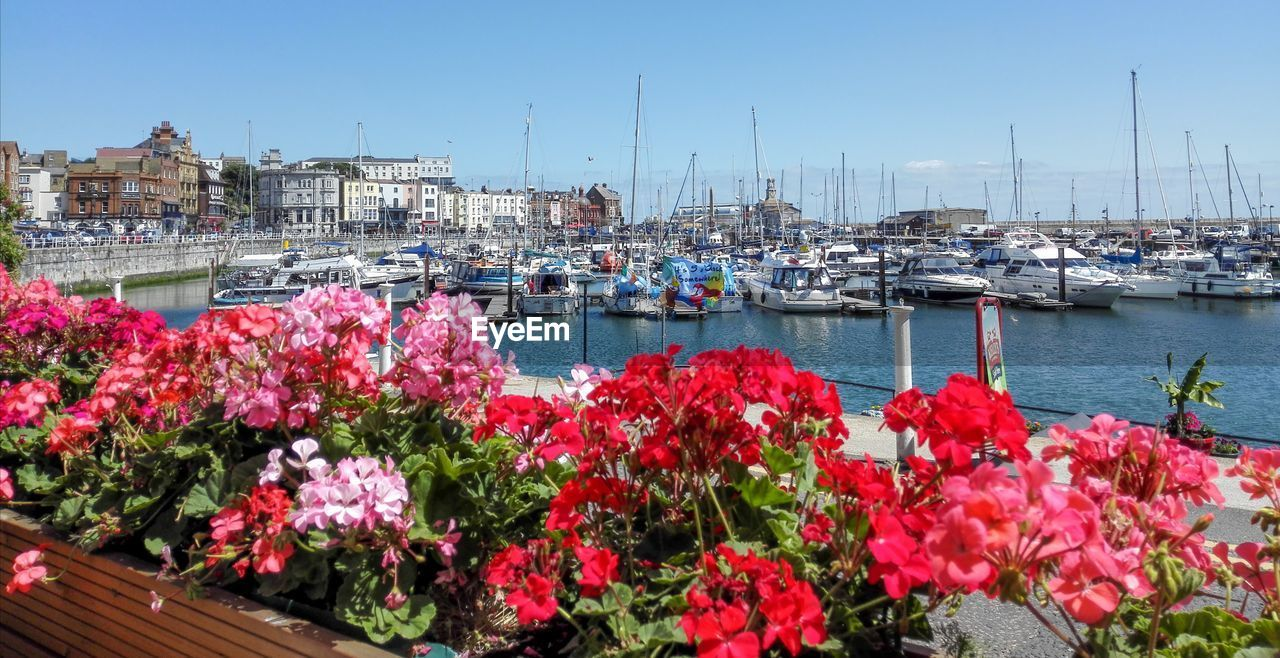 VIEW OF PINK FLOWERS AT HARBOR