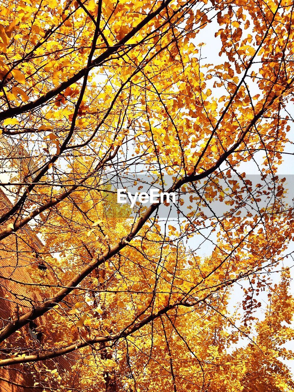 tree, autumn, branch, change, low angle view, nature, beauty in nature, leaf, growth, outdoors, no people, day, tranquility, maple tree, backgrounds, scenics, full frame, sky, maple, close-up, freshness