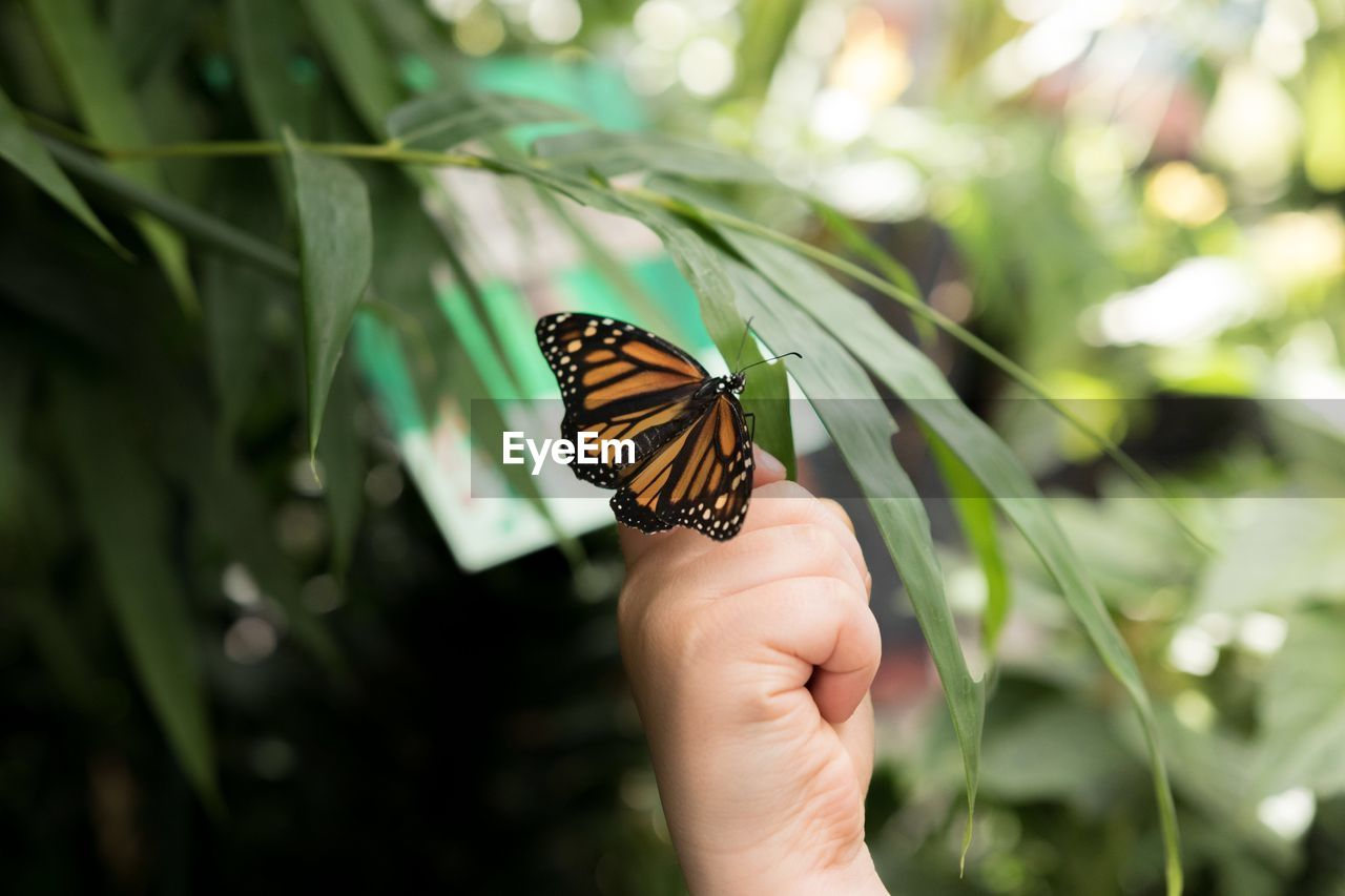 Cropped Hand With Butterfly By Plants